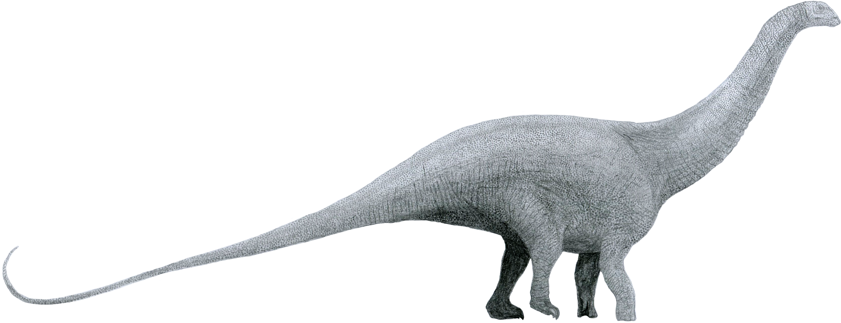 File:Brontosaurus by Tom Parker.png.