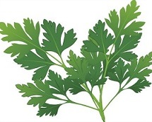 Parsley Clipart.