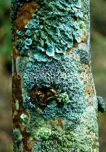 1000+ images about the quintessential colorful fungi! and a lichen.