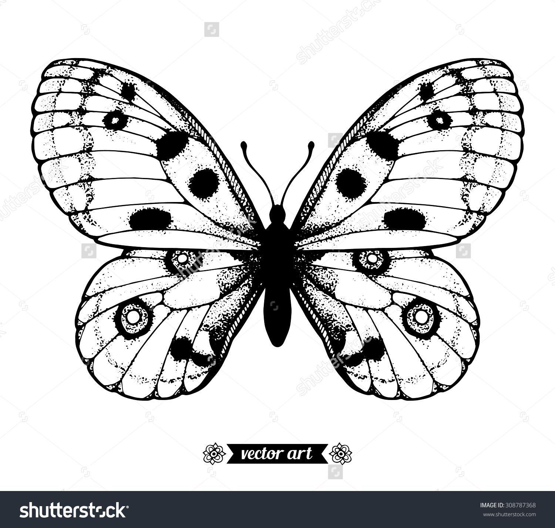 Amazing Fly Butterfly Parnassius Apollo Wildlife Stock Vector.