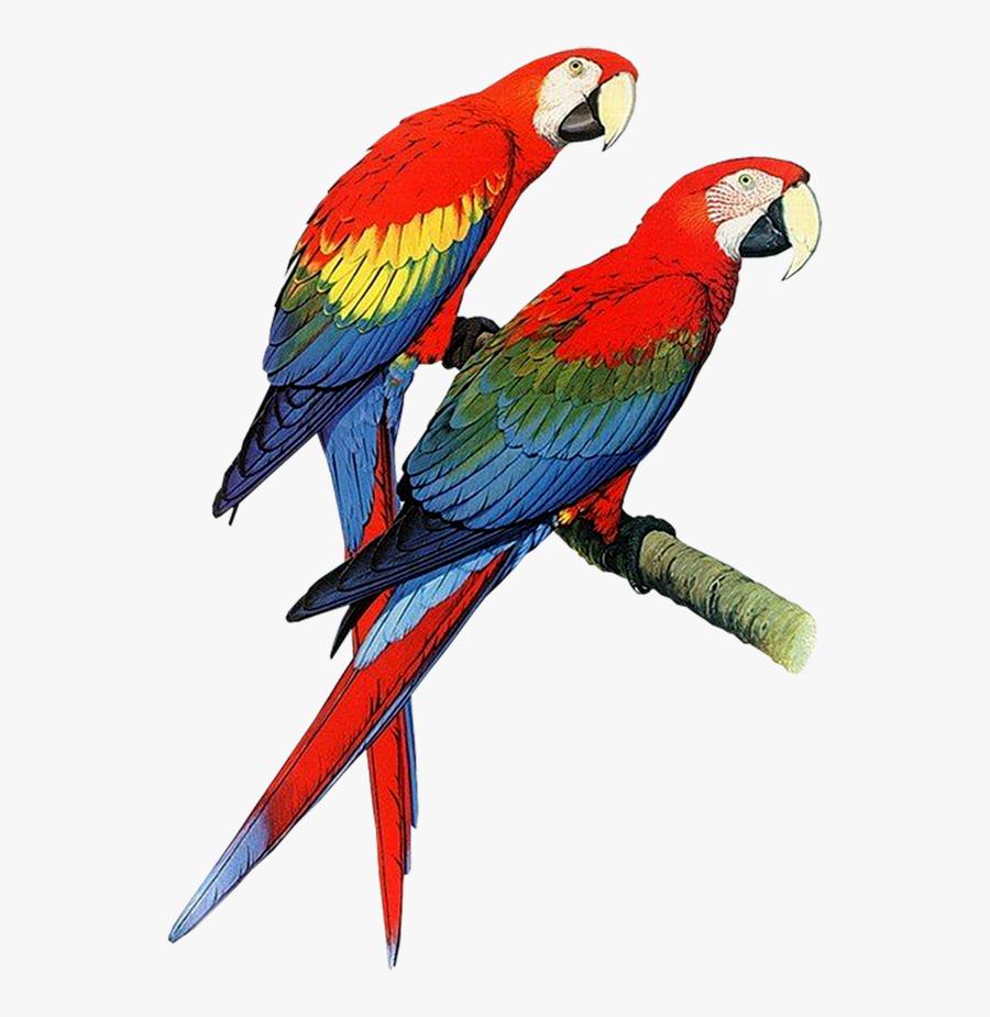 Parrot Bird Pair Of Parrots Clipart Free Clip Art Images.
