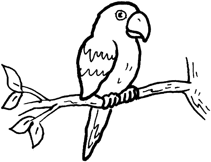 Picture Of Parrot Clipart Black And White.