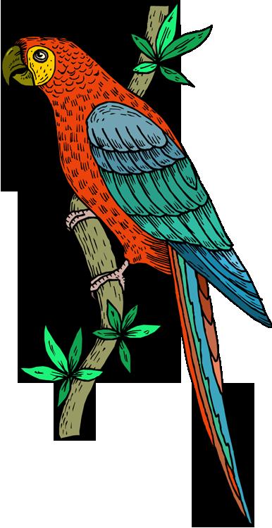 Parrot clipart, #Parrotclipart, Parrot animals clip art black and.