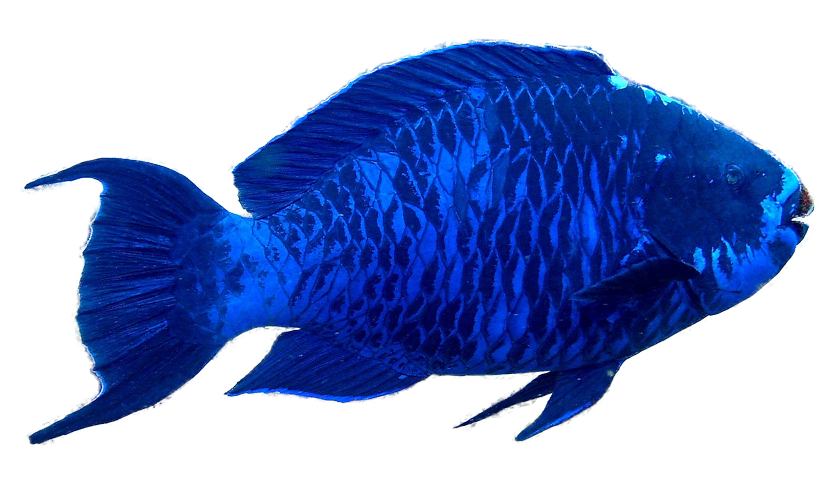 The Parrotfish on emaze.
