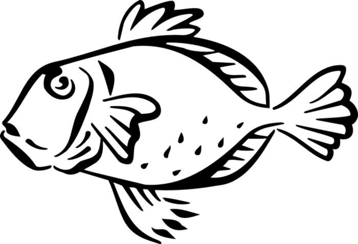 Parrot Fish [M312511].