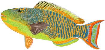 Fish Album.
