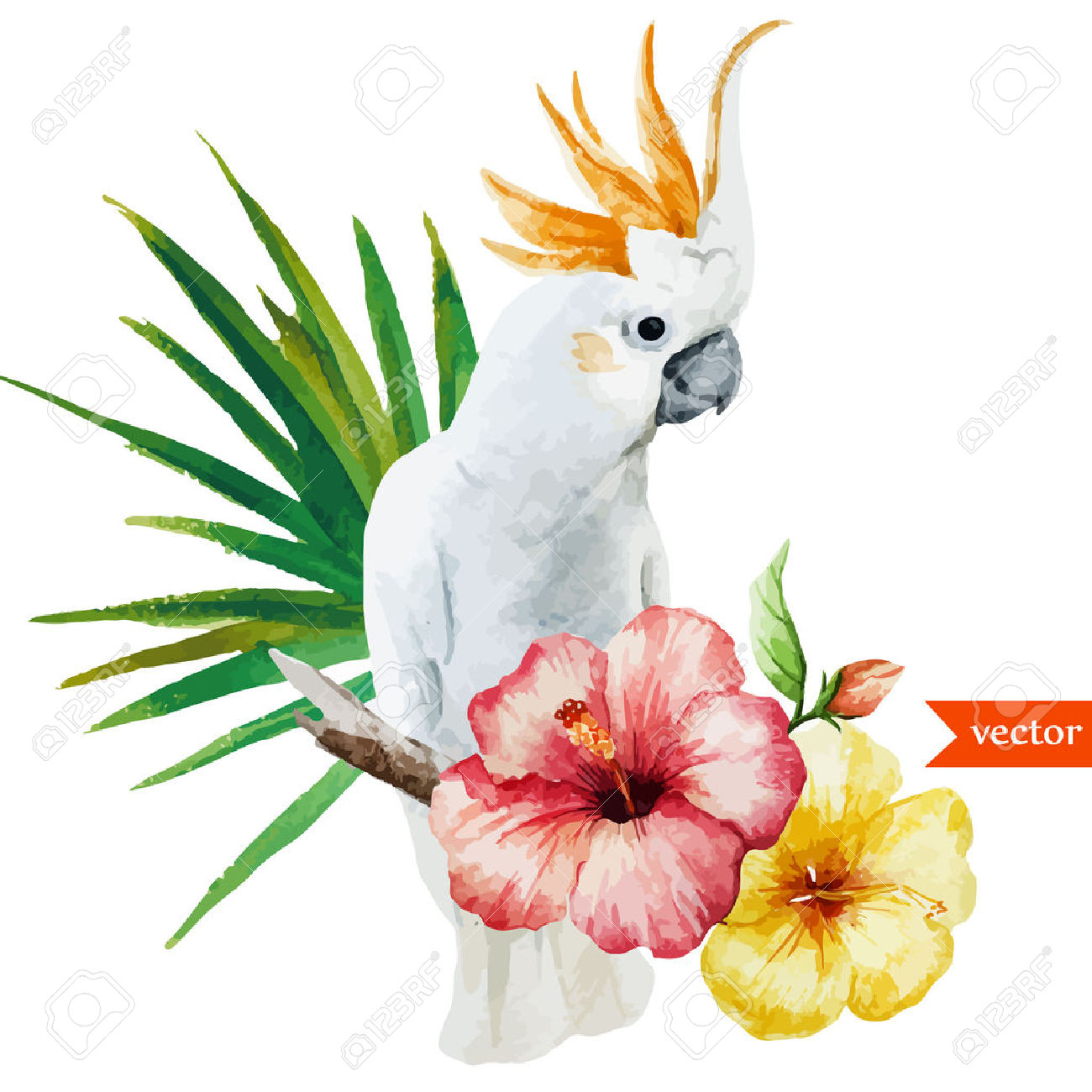 White Parrot Royalty Free Cliparts, Vectors, And Stock.