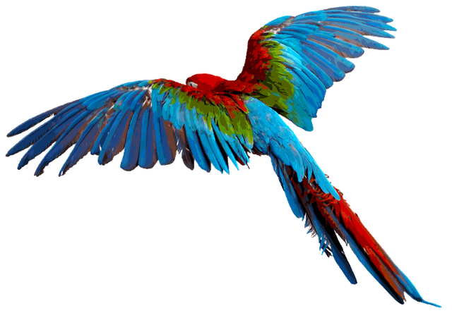 Parrot PNG Images, Flying, Green, Pirate Parrots Transparent.