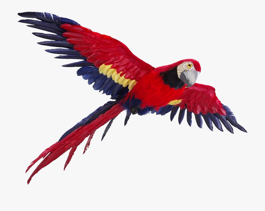 Parrot Clipart Picsart Png.
