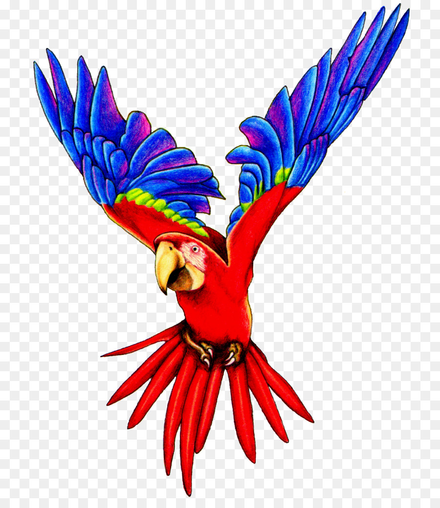 Bird Parrot clipart.