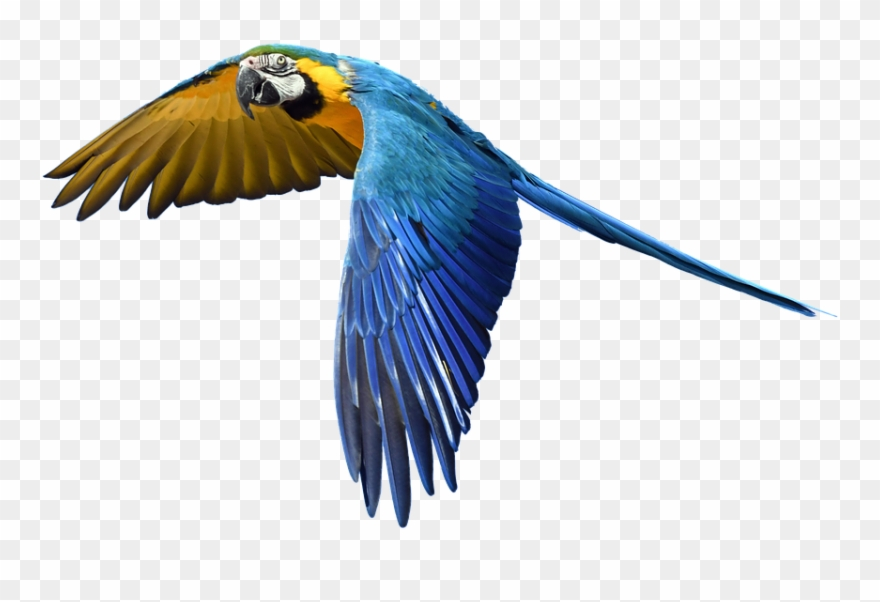 Free Photo Fly Flight Colorful Isolated Parrot.