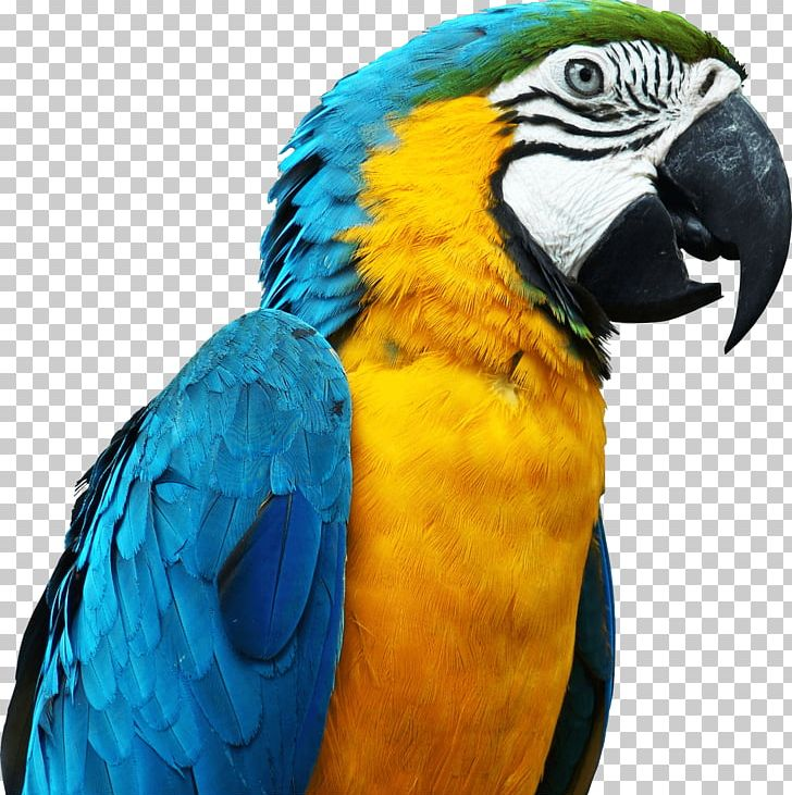 Large Parrot Head PNG, Clipart, Animals, Birds, Parrots Free.