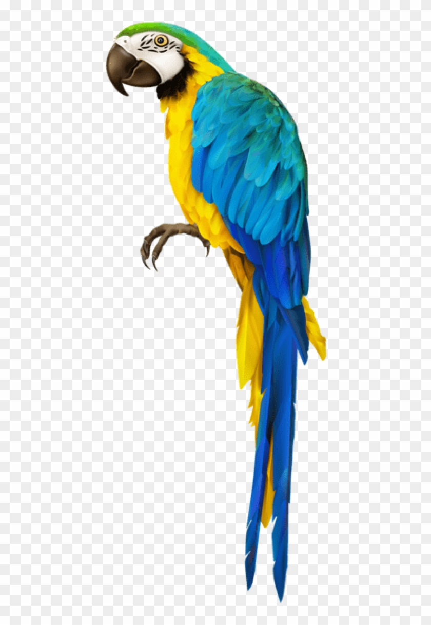 Free Png Download Parrot Transparent Png Images Background.