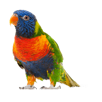 Download Parrot Free PNG photo images and clipart.