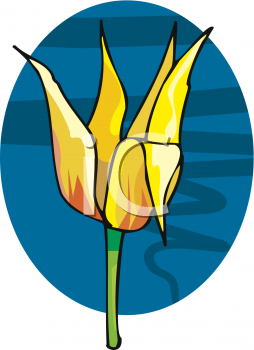 Royalty Free Clipart Image: A Parrot Tulip Blossom.