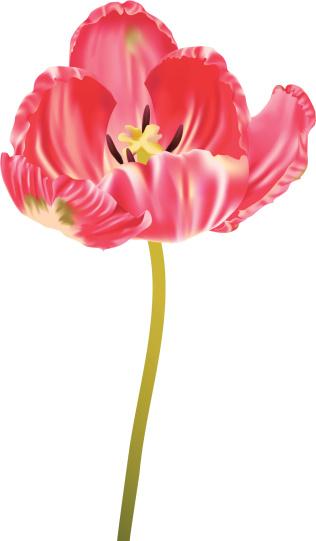 Parrot Tulip Clip Art, Vector Images & Illustrations.