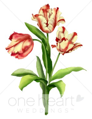 Parrot Tulips Clipart.