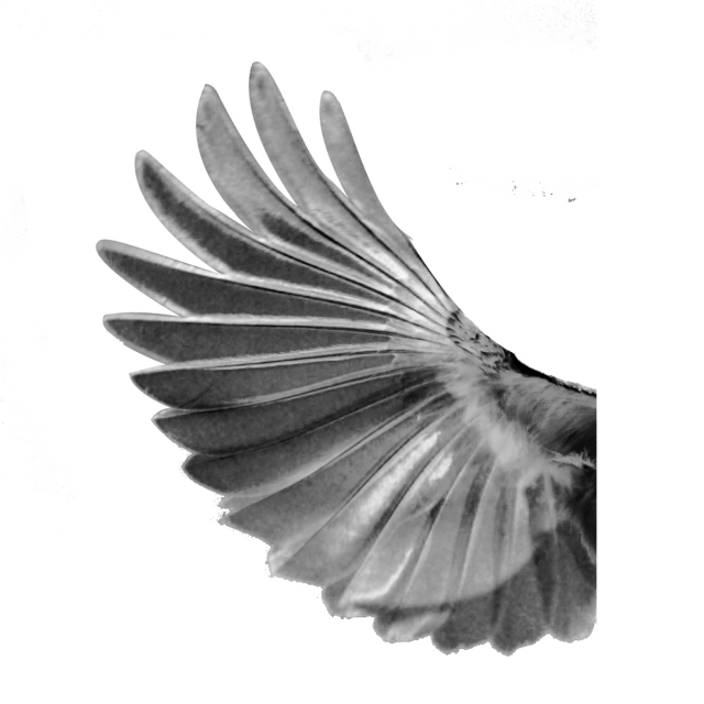 Small Birds Wings, Wing Transparent, Wings Png, Sharp Wings.