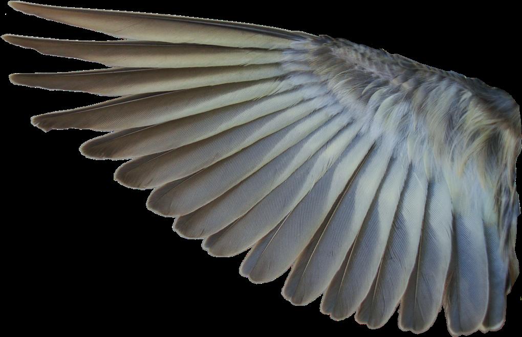 Download Free png Download Bird Wings Png Bird Wing.
