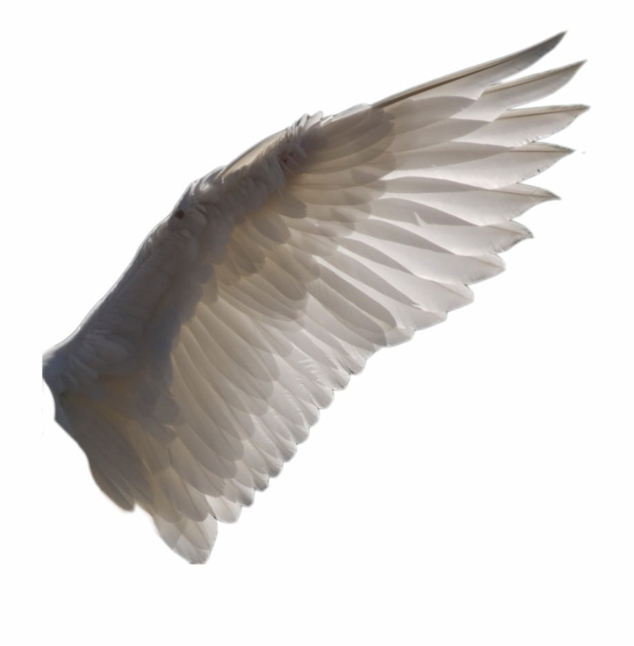 Free Bird Wing Png, Download Free Clip Art, Free Clip Art on.