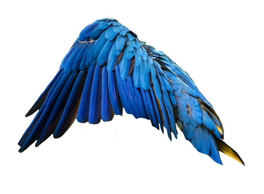 blue #wing #wingsofanangel #wings #feathers.