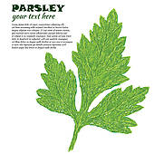 Parsley Clipart Illustrations. 2,636 parsley clip art vector EPS.