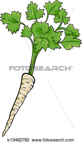 Clipart of parsley root vegetable cartoon illustration k13462782.
