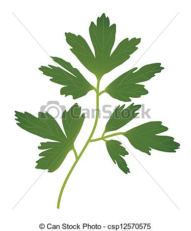 Parsley Illustrations and Stock Art. 3,374 Parsley illustration.
