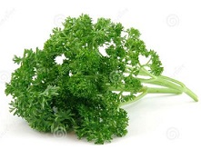 Free Parsley Clipart.