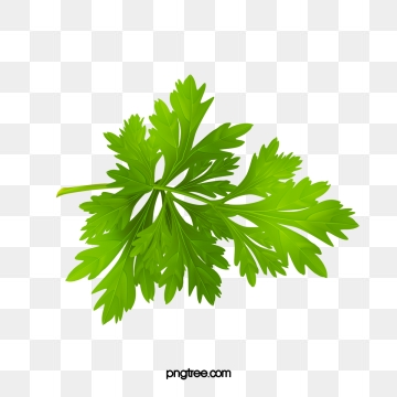 Parsley Png, Vector, PSD, and Clipart With Transparent.