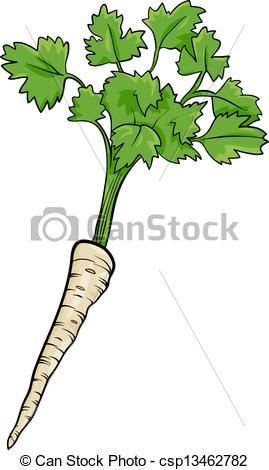 Vector of parsley root vegetable cartoon illustration.
