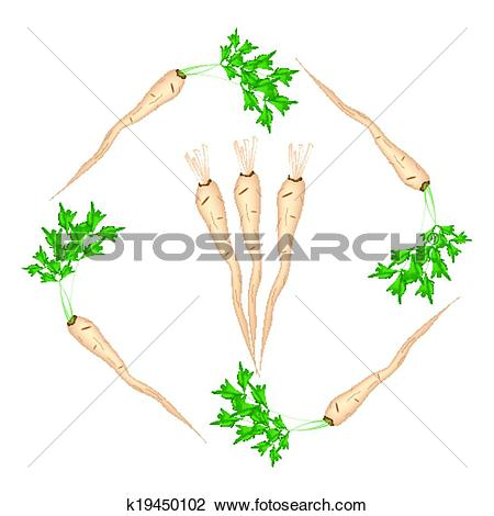 Clipart of Fresh Green Parsley Roots on White Background k19450102.