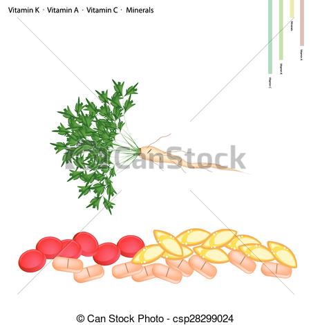 Vector Illustration of Parsley Root with Vitamin C, B6 and.