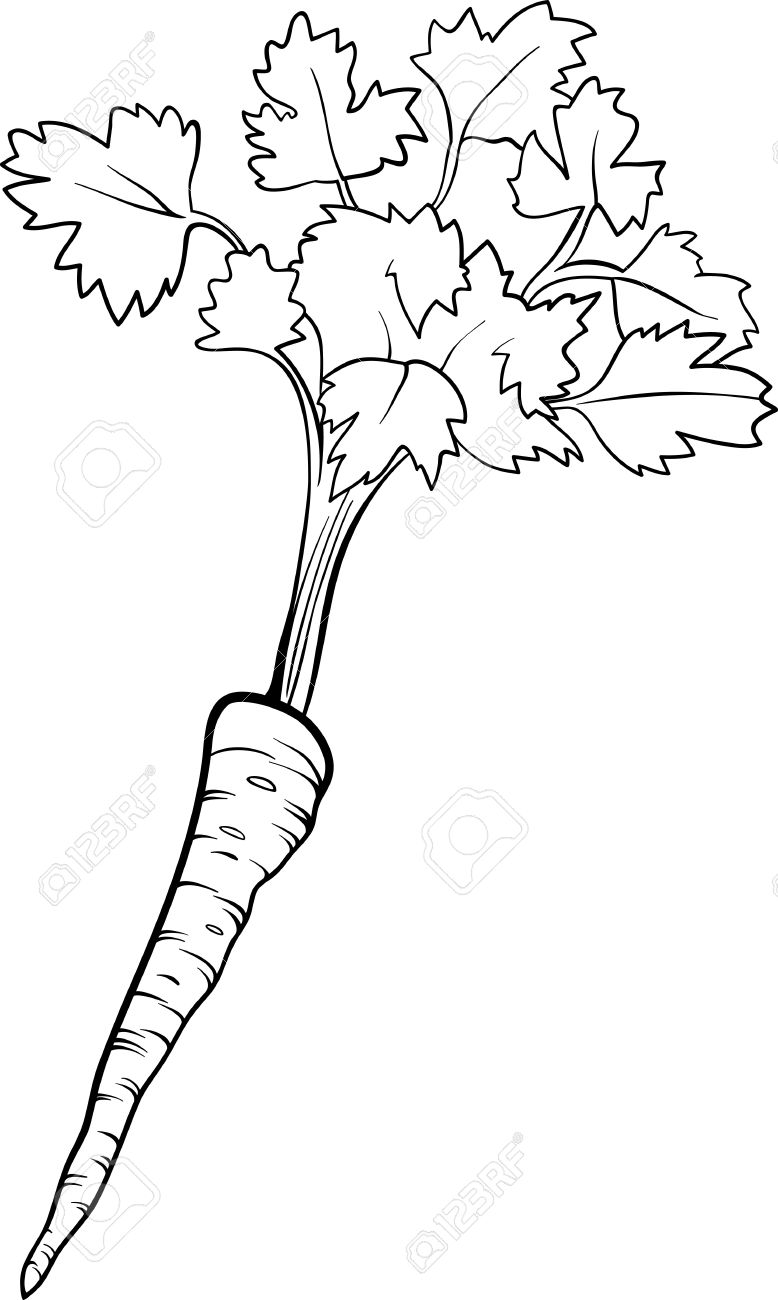 Black And White Cartoon Illustration Of Parsley Root Vegetable.