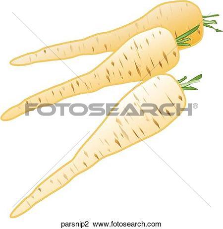 Clip Art of Parsnips parsnip2.