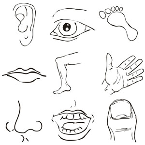 Cartoon Of Face Part Clipart.