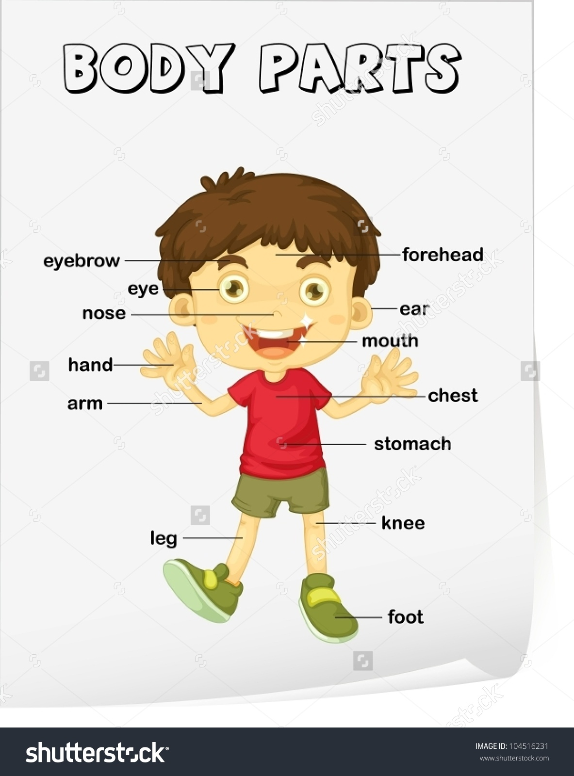 Vocabulary Worksheet Parts Body Stock Vector 104516231.