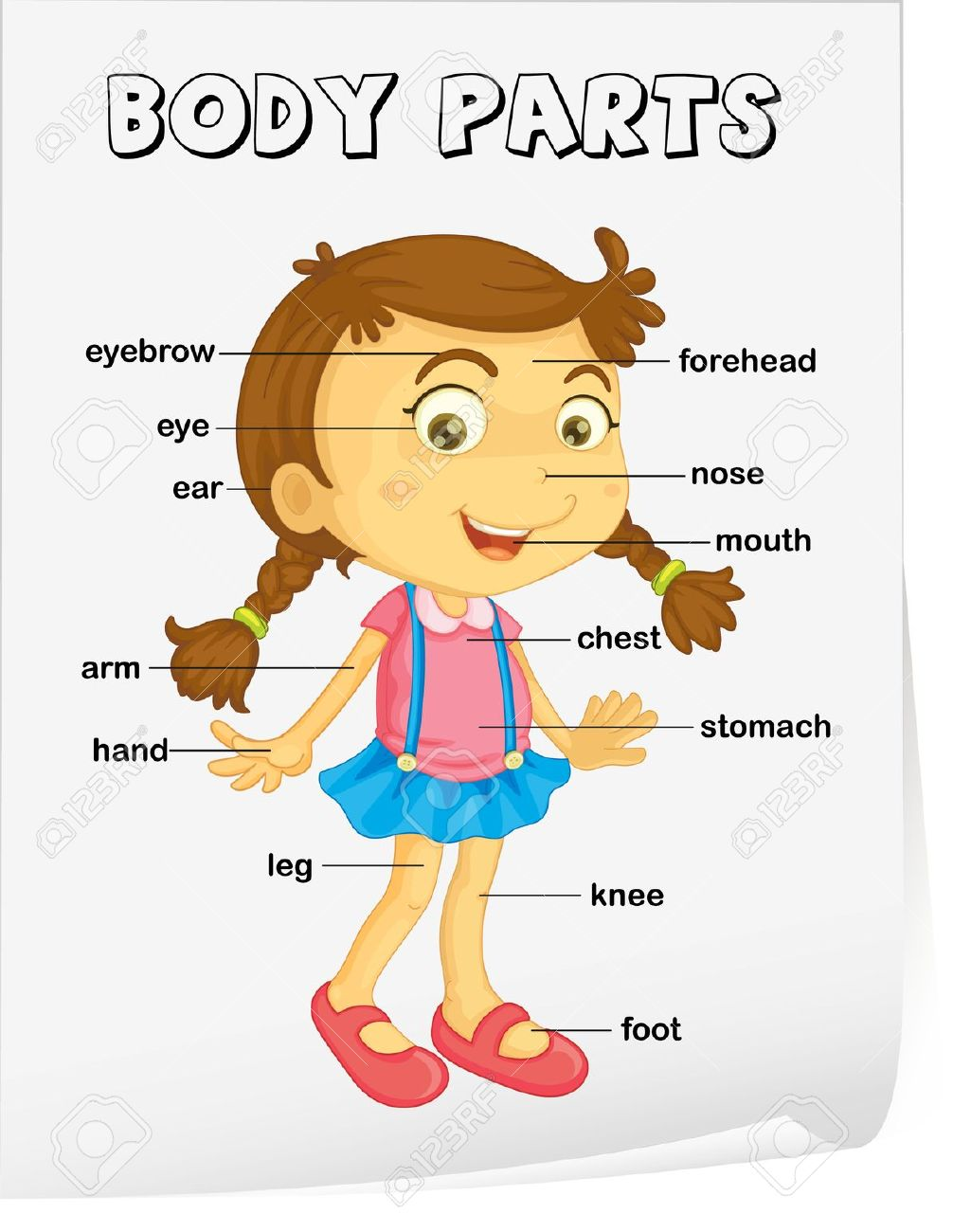 Parts Of The Body Clipart.