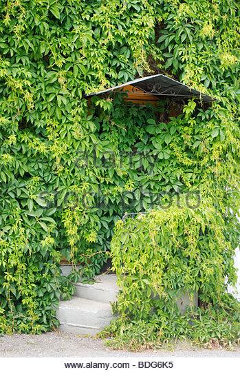 Vitacea Stock Photos & Vitacea Stock Images.