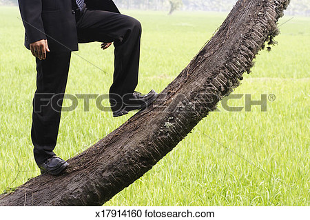 Partial tree trunk clipart.