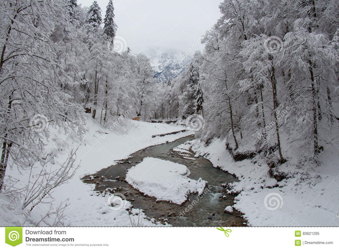 Cold River Between Trees Near Partnach Gorge In Winter Time.