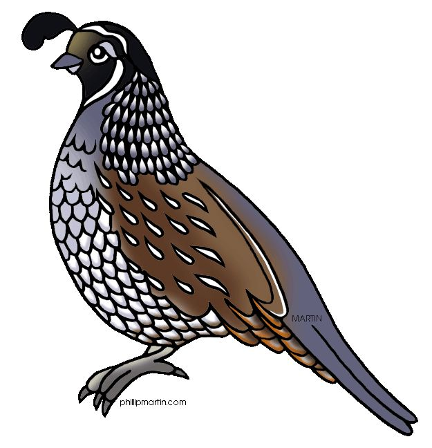 Partridge Clipart.