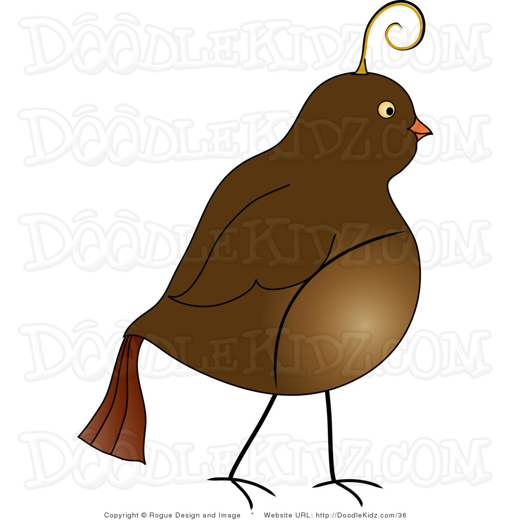 Partridge Clipart Free.