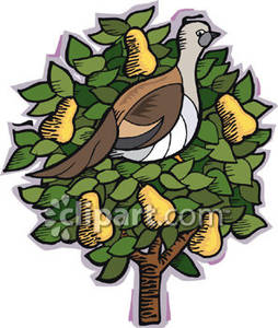 A Partridge In a Pear Tree.