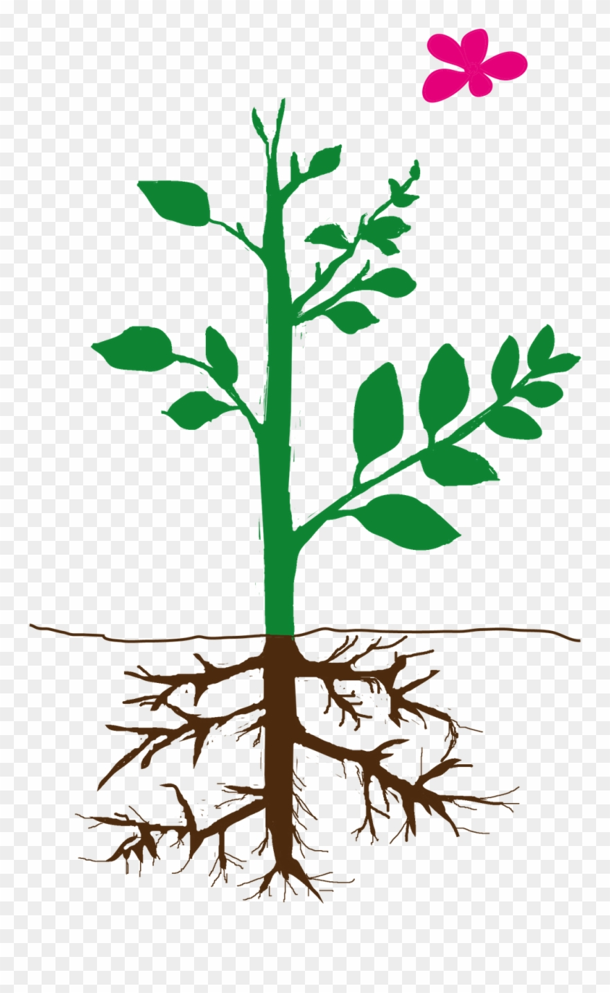 Parts Of Plant Png Clipart (#2113424).