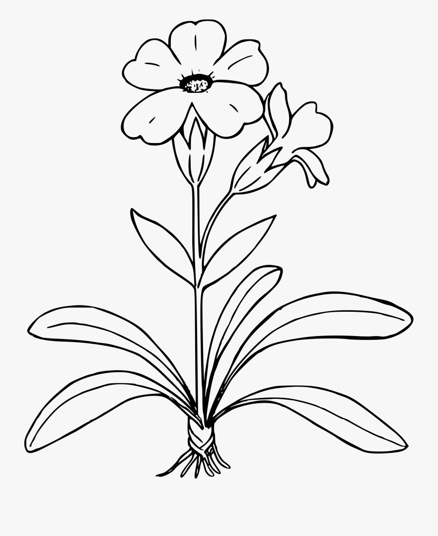 Transparent Parts Of A Flower Clipart.
