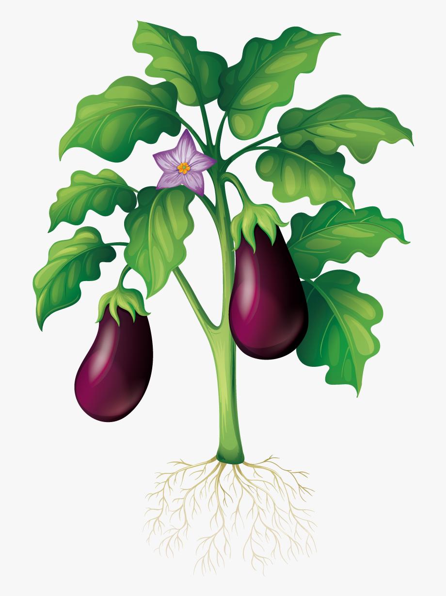 Eggplant Clipart Garden.