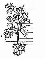 Parts Of A Flower Diagram Clipart.