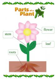 Parts Of A Plant For Kids Clipart.