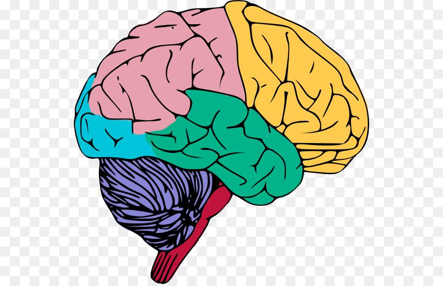 Human Brain Clipart Free.